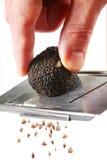 The mushroom of truffle Royalty Free Stock Photos