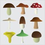 Mushroom types symbols eps10. Variation of mushroom types symbols eps10 Royalty Free Stock Photography
