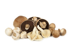 Mushroom Varieties over White Royalty Free Stock Image
