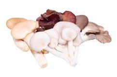 Mushroom varieties Stock Image