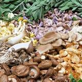 Mushroom variety Royalty Free Stock Photos