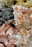 Mushroom in various color. Stack of fresh mushroom in various color, shown as raw, fresh and healthy vegetable and agriculture concept Stock Photography