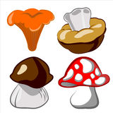 0416_38 mushroom Royalty Free Stock Photo