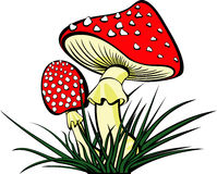 Mushroom. Vector illustration of two fly agaric mushroom Royalty Free Stock Photography