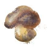 Mushroom vector logo design template. nutrition or Stock Image