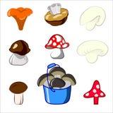 0416_39 mushroom Stock Photos
