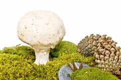 Mushroom on the vegetation Stock Photos