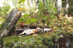 Mushroom village on. Mushroom village grass leafs fall Moss log dead Royalty Free Stock Photos