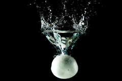 Mushroom Water Splash Stock Image