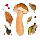 Mushroom watercolor illustration Stock Photo