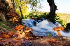 Mushroom waterfall Stock Image