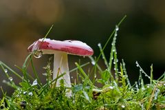 Mushroom and wet grass Stock Photos