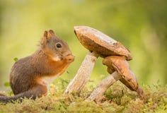 Mushroom whispers Stock Photo