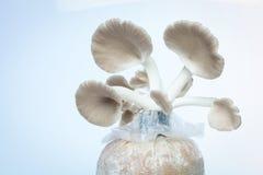 Mushroom. On white background Stock Photos