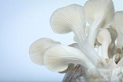 Mushroom. On white background Royalty Free Stock Image