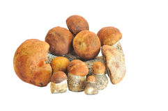 Mushroom. On a white background stock photography
