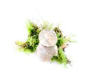 Mushroom on white background autumn Royalty Free Stock Photography