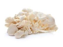 Mushroom on white background Stock Photography