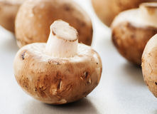 Mushroom  on white background Royalty Free Stock Image