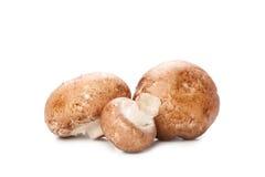 Mushroom on white Stock Images