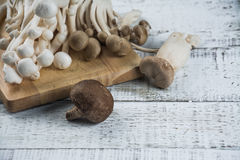 Mushroom on the white wood Royalty Free Stock Photos