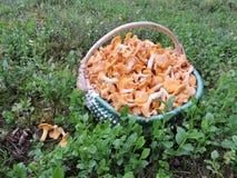 Mushroom in wicker Stock Photo