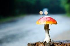 Mushroom. Wild mushroom grown on a stump Stock Image