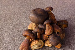 The mushroom Royalty Free Stock Image