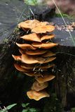 Mushroom on wood in forest. Pyrenees Stock Image