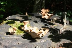 Mushroom on wood in forest. Pyrenees Stock Photo