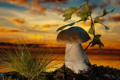 Mushroom in the wood at sunset. Mushroom with grass at sunset Stock Photography
