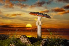 Mushroom in the wood at sunset in the rain. Toadstool with cones and grass at sunset Royalty Free Stock Photography