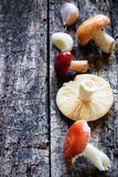 Mushroom on a wooden background selective focus Stock Images
