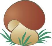 Mushroom1 Stock Image
