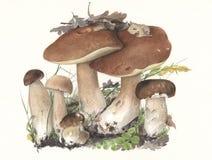 MushroomBoletusEdulis.jpg Obraz Stock