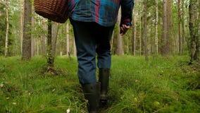 Mushroomer rassemblent le champignon sur la forêt pendant le jour d'été banque de vidéos