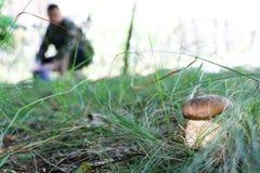 Mushroomer trova il porcino bianco Fotografia Stock Libera da Diritti