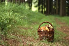 Mushrooming Stock Images