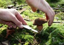 mushrooming Foto de Stock Royalty Free