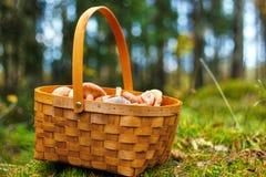 Mushrooming basket Stock Photography
