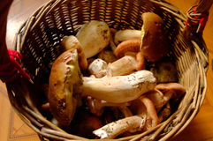 After mushrooming Stock Photography