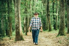 Mushrooming in forest, Grandfather hunting mushrooms over summer forest background. royalty free stock photography