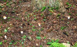 Mushrooming in the forest Royalty Free Stock Photos