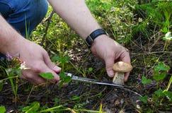 Mushrooming - hand with a knife cut the boletus. Big mushroom wi Royalty Free Stock Photography