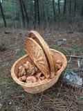 mushrooming Royalty Free Stock Photography