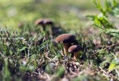 Mushrooming season Stock Photos