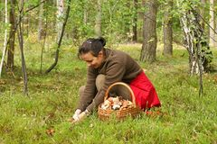 Mushrooming, woman picking mushrooms in the forest Royalty Free Stock Photo