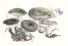MushroomRussula.jpg Fotografia Royalty Free