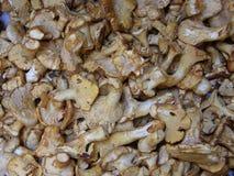 Mushrooms. A Variety Of Mushrooms Available Stock Photos