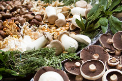 Mushrooms. Close up of a multitude of different mushrooms Stock Photography